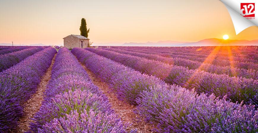 Rosé aus der Provence: Wein für Liebhaber